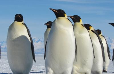 Penguin (emperor).content