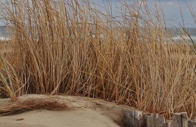 Seashore.content