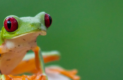 Amphibians.content