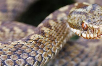 Reptiles (british).content
